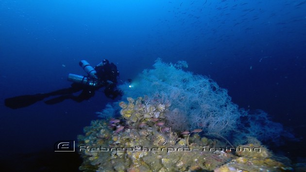 There was an amazing amount of life today on The San Marco wreck in Sardini - Rebreatherpro-Training