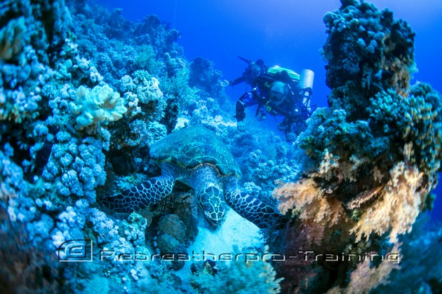 Another photo from our Recent trip out to The Red Sea - Rebreatherpro-Training