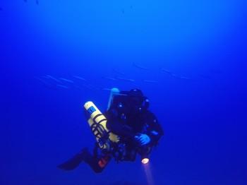 Hammerhead Rebreather diver Rebreatherpro-Training