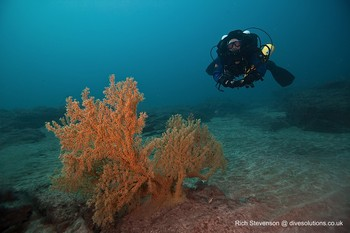 Rebreather Diver with Gorgonian fan coral Rebreatherpro-Training