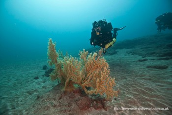 Diver with Gorgonian fan coral Rebreatherpro-Training