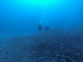 Twinset divers on The Bluebird Rebreatherpro-Training