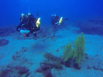 Twinset divers with Gorgonian fan coral Rebreatherpro-Training
