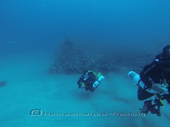 Look at the amount of fish around the Rebreather divers. Rebreatherpro-Training