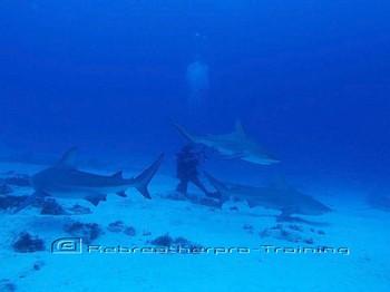 Throwback Thursday Shark picture. Rebreatherpro-Training